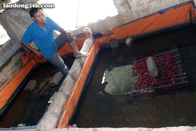 Bể nuôi lươn thịt của ông