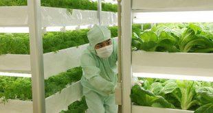 Xuất khẩu lao động Nhật Bản làm nông nghiệp